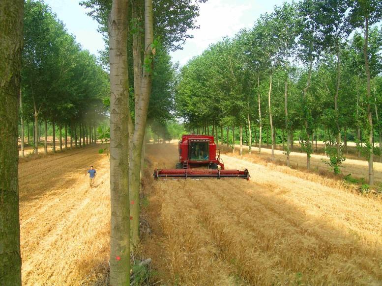 L'agroforesterie : une solution viable - Sentiers